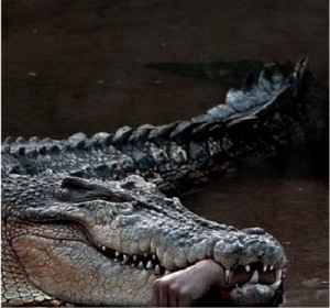 African Crocodile with Hand in Mouth