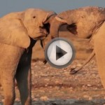ethosha-national-park-video-thumbnail