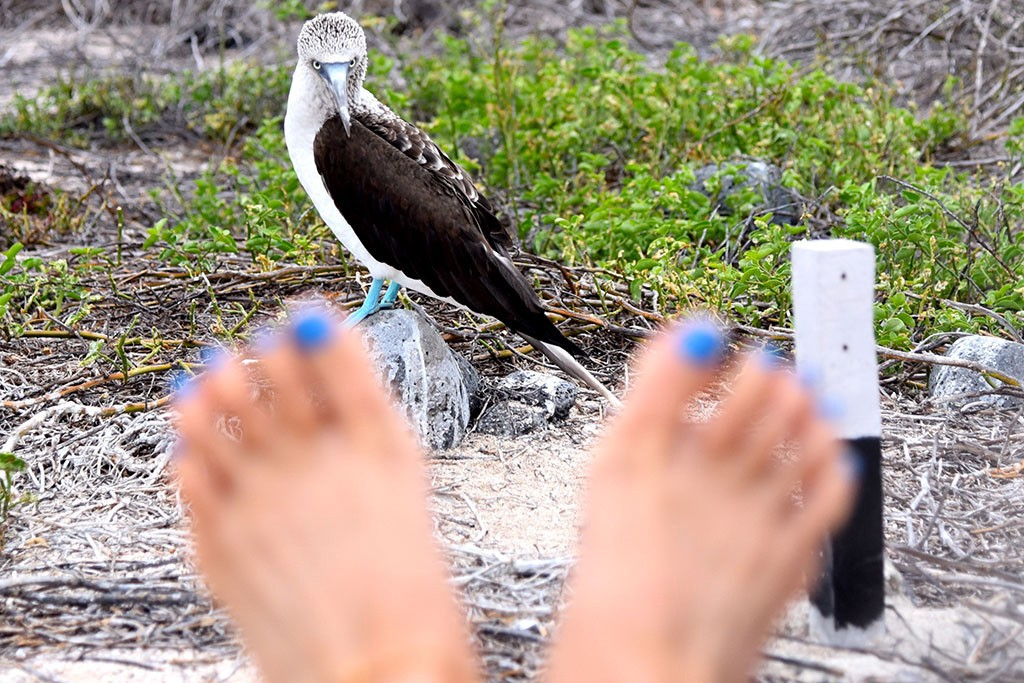 Blue-Footed Booby   Photo by Brian Monnin