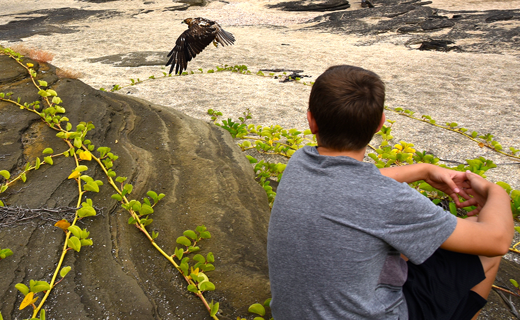 Theo taking it in as a Galapagos Hawk comes to rest just a few feet away. | Photo by Brian Monnin